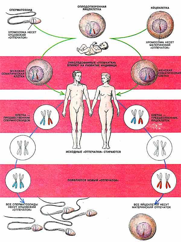 Вирус папилломы человека ВПЧ Квант15 6111618313335